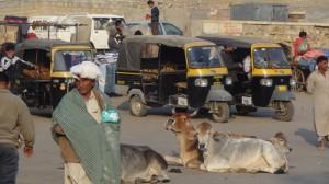 Jaisalmer (39)s